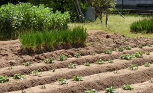 家庭菜園の基本